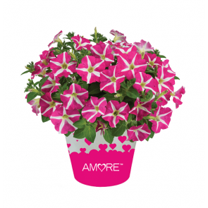 AMORE™ PINK HEARTS